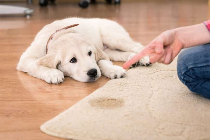 carpet cleaning mealbourne